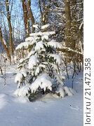 Купить «Елочка в лесу после снегопада», эксклюзивное фото № 21472358, снято 24 января 2016 г. (c) Елена Коромыслова / Фотобанк Лори