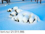 Купить «Дерево покрытое снегом , форма сугроба похожей на зверя», фото № 21511986, снято 27 января 2016 г. (c) Алексей Маринченко / Фотобанк Лори
