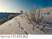 Купить «Мороз и иней», фото № 21672002, снято 26 января 2016 г. (c) Владимир Федечкин / Фотобанк Лори