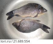 Рыбы. Стоковое фото, фотограф Юлия Каюнова / Фотобанк Лори