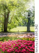 Купить «Тюльпаны в весеннем парке на Елагином острове в Санкт-Петербурге, Россия», фото № 21691342, снято 20 мая 2014 г. (c) Галина Ермолаева / Фотобанк Лори