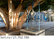 Купить «An ancient well and centuries-old ficus near the Greek Church of the Cathedral of the Twelve Apostles, Israel», фото № 21702186, снято 6 декабря 2015 г. (c) Наталья Волкова / Фотобанк Лори