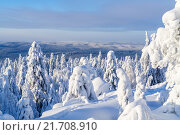 Зимний лес на Урале, причудливые фигуры из заваленных снегом деревьев. Стоковое фото, фотограф Иван Рочев / Фотобанк Лори