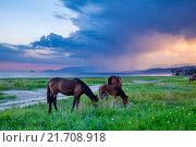 Пасущиеся лошади на берегу Черного моря под грозовыми тучами. Стоковое фото, фотограф Иван Рочев / Фотобанк Лори