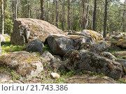 Купить «Россия, Карелия. Каменные глыбы в лесу на берегу Ладожского озера.», эксклюзивное фото № 21743386, снято 14 июля 2015 г. (c) Александр Циликин / Фотобанк Лори