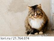 Купить «Портрет кота», фото № 21764074, снято 6 февраля 2016 г. (c) Инга Макеева / Фотобанк Лори