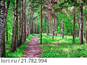 Купить «Forest landscape in early summer.», фото № 21782994, снято 14 июля 2020 г. (c) easy Fotostock / Фотобанк Лори
