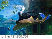 Купить «Аквалангист играет с акулой в океанариуме», фото № 21800766, снято 4 сентября 2012 г. (c) Сергей Гусев / Фотобанк Лори