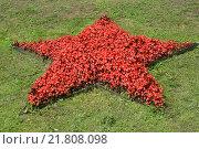 Растения бегонии вечноцветущей (Begonia semperflorens Link & Otto) в форме красной звезды на газоне. Стоковое фото, фотограф Ирина Борсученко / Фотобанк Лори