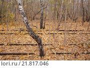 Купить «Berlin, Germany, old railway tracks in the nature park Schoeneberger Südgelände», фото № 21817046, снято 18 ноября 2012 г. (c) Caro Photoagency / Фотобанк Лори