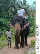 Купить «Мужчина катается на слоне», фото № 21863710, снято 14 декабря 2018 г. (c) Некрасов Андрей / Фотобанк Лори