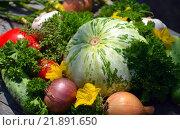 Купить «Урожай овощей», фото № 21891650, снято 29 июля 2014 г. (c) Седых Алена / Фотобанк Лори