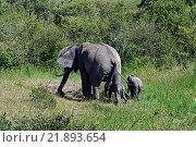 Купить «Слон с детенышами в естественной среде обитания, Африканская саванна», фото № 21893654, снято 2 января 2012 г. (c) Эдуард Кислинский / Фотобанк Лори