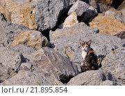 Кошка на камнях. Стоковое фото, фотограф Павел Чайкин / Фотобанк Лори