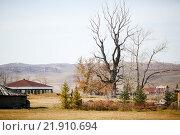 Купить «Сухое дерево на фоне гор осенью», фото № 21910694, снято 10 октября 2015 г. (c) Евгений Майнагашев / Фотобанк Лори