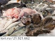 Купить «Raw fresh fish», фото № 21921662, снято 19 января 2019 г. (c) Яков Филимонов / Фотобанк Лори