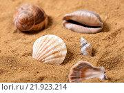 Купить «Морские ракушки на песке», фото № 21923214, снято 16 января 2016 г. (c) Стивен Жингель / Фотобанк Лори