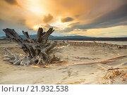 Коряги на берегу. Стоковое фото, фотограф Александр Носков / Фотобанк Лори