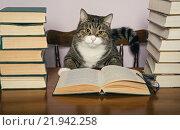 Кот сидит за столом перед стопками книг. Стоковое фото, фотограф Okssi / Фотобанк Лори