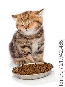 Купить «Маленький котенок и корм», фото № 21942486, снято 14 декабря 2015 г. (c) Okssi / Фотобанк Лори