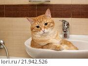 Купить «Рыжий кот лежит в раковине», фото № 21942526, снято 19 января 2016 г. (c) Okssi / Фотобанк Лори
