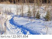 Извилистая тропа в снегу среди молодых деревьев. Стоковое фото, фотограф Тимофеев Владимир / Фотобанк Лори