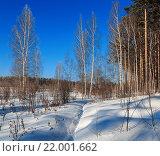 Зимний лес в солнечную погоду. Стоковое фото, фотограф Тимофеев Владимир / Фотобанк Лори