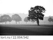 Купить «tree in fog - bw», фото № 22004542, снято 16 июня 2019 г. (c) easy Fotostock / Фотобанк Лори