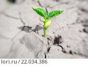Купить «Зеленый росток бобов в почве», фото № 22034386, снято 23 июня 2011 г. (c) Ирина Мойсеева / Фотобанк Лори