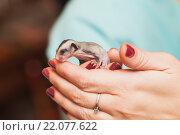 Купить «Детеныш опоссума в женских руках», фото № 22077622, снято 23 августа 2014 г. (c) EugeneSergeev / Фотобанк Лори