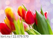 Купить «close up of tulip flowers», фото № 22079570, снято 28 января 2016 г. (c) Syda Productions / Фотобанк Лори