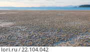 Купить «Отлив на пляже», фото № 22104042, снято 9 декабря 2014 г. (c) hunta / Фотобанк Лори
