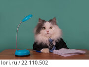 Купить «Кошка за столом в деловом костюме», фото № 22110502, снято 24 января 2016 г. (c) Светлана Валуйская / Фотобанк Лори
