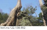 Купить «Храм Та Пром в Ангкор-Ват, Камбоджа», видеоролик № 22138902, снято 10 марта 2016 г. (c) Михаил Коханчиков / Фотобанк Лори