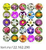 Купить «Коллаж из разнообразных цветов на белом фоне», фото № 22162290, снято 21 сентября 2019 г. (c) Евгений Ткачёв / Фотобанк Лори