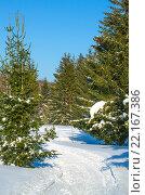 Пейзаж тайги зимой. Стоковое фото, фотограф Наталья Богуцкая / Фотобанк Лори