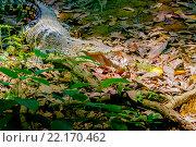 Купить «Крокодил», эксклюзивное фото № 22170462, снято 26 октября 2015 г. (c) Хайрятдинов Ринат / Фотобанк Лори