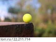 Шарик для пейнтбола на столе. Стоковое фото, фотограф Nickolay Samokhin / Фотобанк Лори