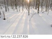 Тени на снежного покрове зимнего березового леса утром на рассвете. Стоковое фото, фотограф Сергей Кудрявцев / Фотобанк Лори