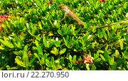 Ящерица в траве. Стоковое фото, фотограф Данил Малыгин / Фотобанк Лори