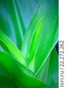 Купить «Растение крупным планом», фото № 22272262, снято 25 декабря 2010 г. (c) Морозова Татьяна / Фотобанк Лори
