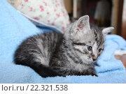 Красивый котенок. Стоковое фото, фотограф Татьяна Дмитреняк / Фотобанк Лори
