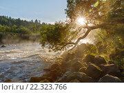 Утренний летний пейзаж на реке с порогами и туманом в Карелии на Ладоге. Река Асиланйоки. Стоковое фото, фотограф Горшков Игорь / Фотобанк Лори