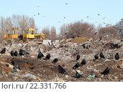 Купить «Стая черных ворон на городской свалке. Бульдозеры, бомжи и вороны копаются в горах отходов жизнедеятельности человека.», фото № 22331766, снято 18 февраля 2016 г. (c) Александров Никита / Фотобанк Лори