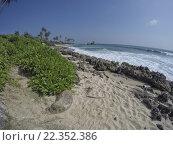 Купить «a dream beach on the indian ocean», фото № 22352386, снято 23 июня 2018 г. (c) PantherMedia / Фотобанк Лори
