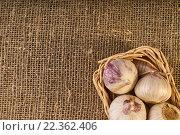 Сырой маленький чеснок в корзине на фоне мешковины. Стоковое фото, фотограф Alex Ryabis / Фотобанк Лори