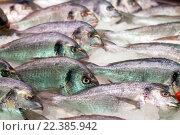 Купить «Raw fresh gilt-head bream fish», фото № 22385942, снято 19 октября 2018 г. (c) Яков Филимонов / Фотобанк Лори
