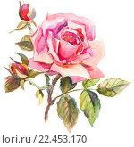 Рисунок розы. Стоковая иллюстрация, иллюстратор Екатерина Кулаева / Фотобанк Лори