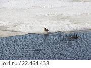 Весеннее таяние льдов на реке Северная Двина. Стоковое фото, фотограф Максим Высоких / Фотобанк Лори