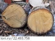 Купить «Распиленное на большие чурки толстое дерево в посёлке Вырица Ленинградской области», фото № 22493758, снято 20 марта 2016 г. (c) Максим Мицун / Фотобанк Лори